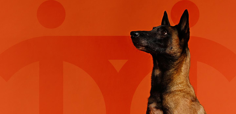 Снимка на Кучето терапевт Кени.